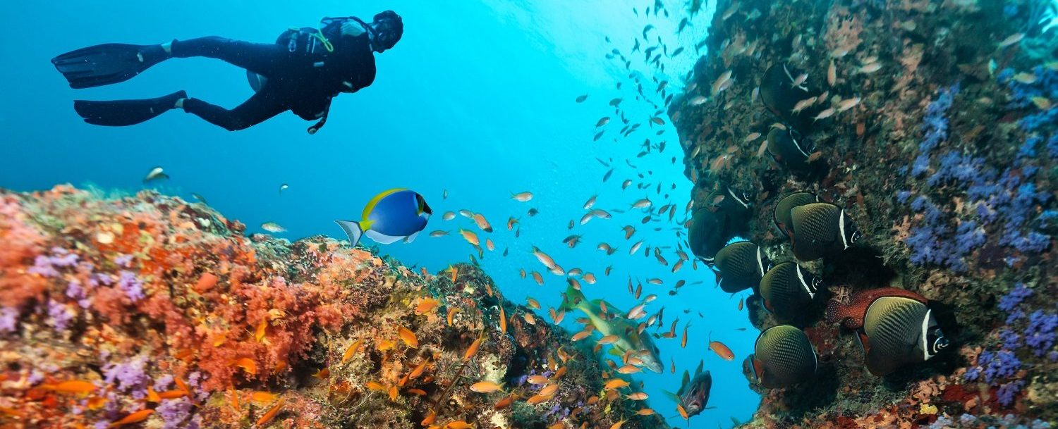 Your Guide To Coral Reef Diving In Grand Cayman The