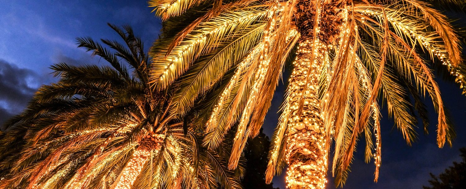 palm trees at the parade of lights grand cayman