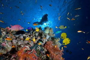 a man diving in the cayman islands with colorful fish
