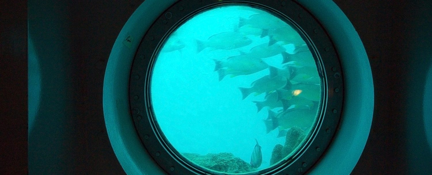 underwater view from Nautilus Submarine
