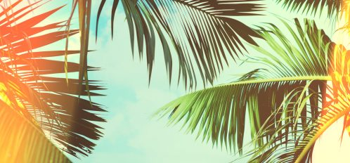 Coconut palm tree on Day Trip From Grand Cayman to Little Cayman