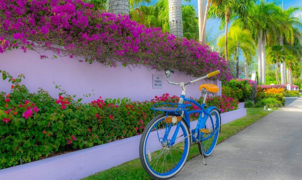 tropical-bike-biking-flowers-outdoor-1024x683